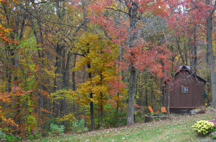 backyard 2 (1140x755)